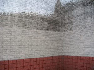 Commercial Wall Pressure Washing